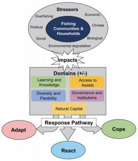 The Adapt, React, Cope (ARC) response framework.