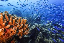 A school of fish swim around a coral reef.