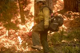 A person in fire-fighting gear walks through a wooded area on fire