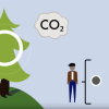 screenshot of animated video about carbon offset on trees